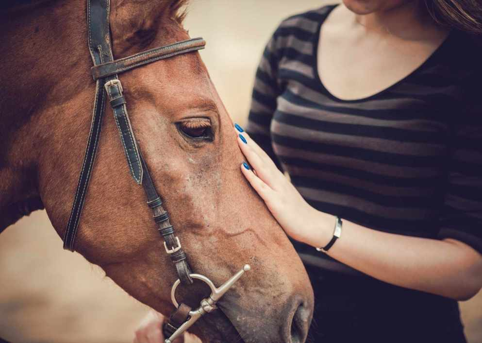 horse with girl pet images