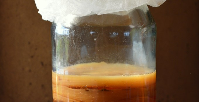 How Your Kombucha SCOBY Works (It's Like Magic!)
