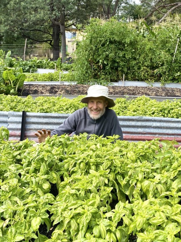Rob sits behind his veggie bed with a big grin on his face and wearing a floppy hat. There is large expanse of healthy looking basil plants in front of him.
