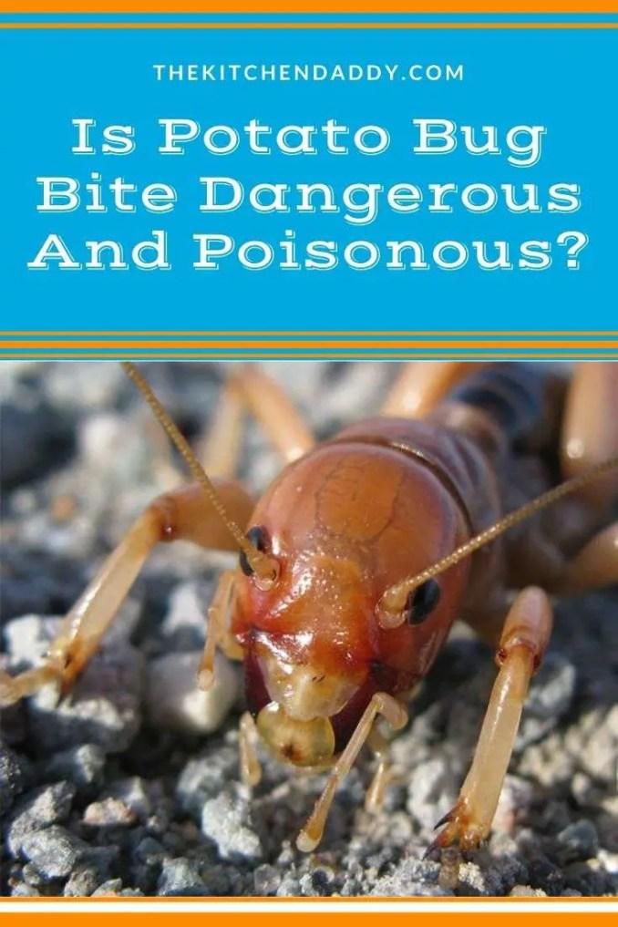 Is Potato Bug Bite Dangerous And Poisonous