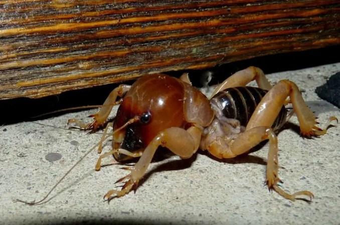 are-potato-bugs-poisonous