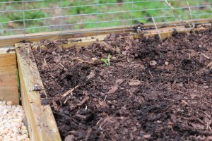 3 Steps to Winterize Your Kitchen Garden