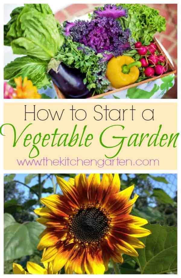 how to start veggie garden