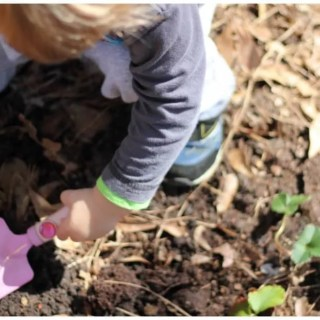 Strawberry Planting with Little Gardeners