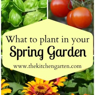 Spring Garden: What to Grow?