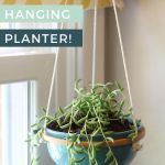 hanging succulent planter in window with yellow curtains