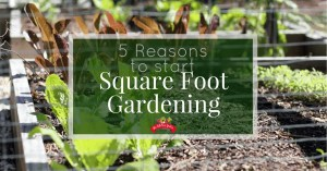 5 Reasons to Start Square Foot Gardening