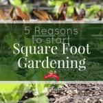 5 Reasons to Start Square Foot Gardening