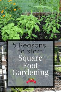 Square foot garden reasons