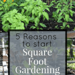 Square foot garden reasons