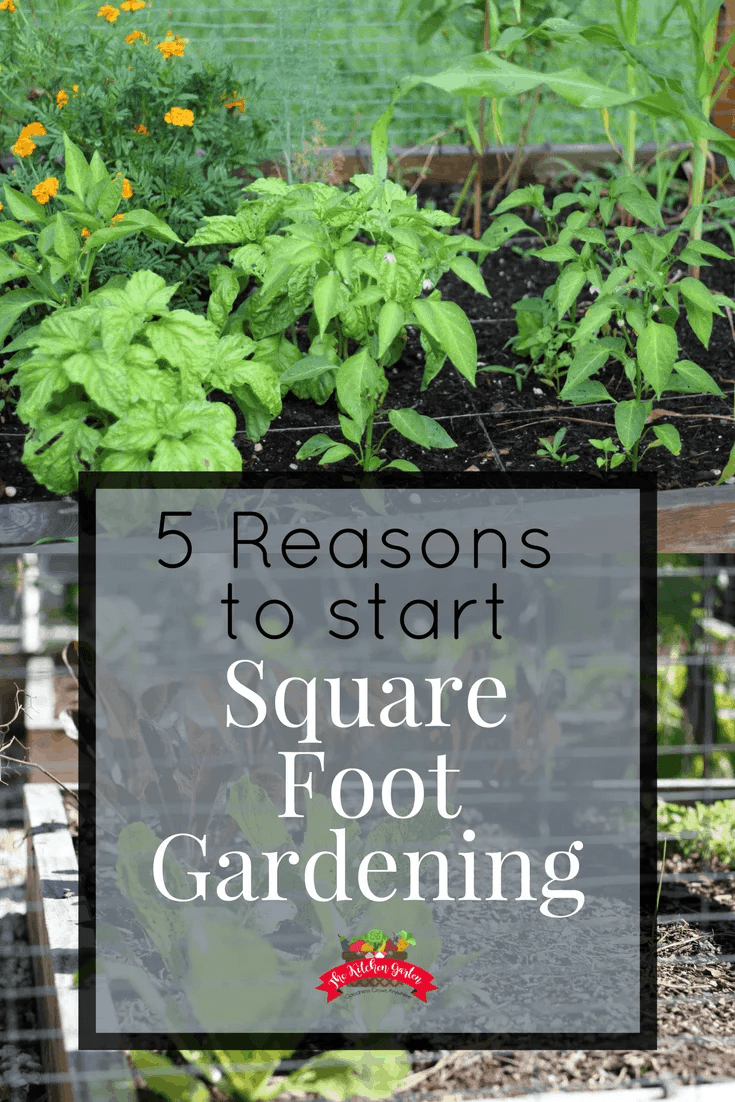 Gardening doesn't have to be time consuming and hard. If you're short on time and energy, but want to have a successful garden, then square foot gardening is for you! Find out why you should start one this year!