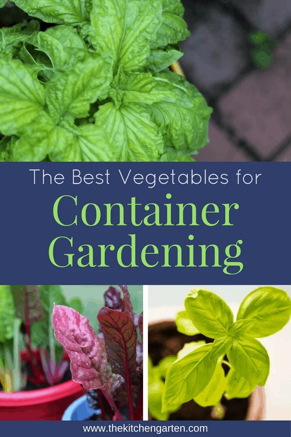 No yard space for gardening or don't want the hassle of tending a full garden? Container gardening allows you to grow your own food while keep the maintenance low! Find out what veggies grow best in container gardens.  #gardening #containergardening