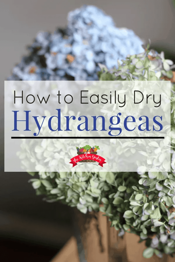 Want to make the beauty of hydrangea blooms last all fall and winter? Knowing how to dry hydrangeas is quick and easy and doesn't require any special tools or ingredients!