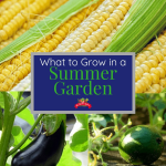 Summer Garden: What to Grow