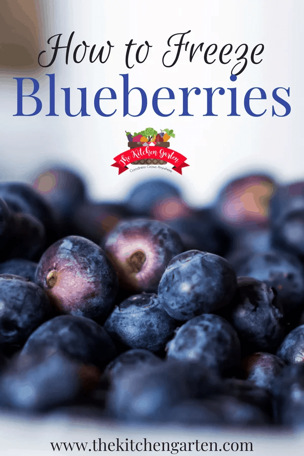 Whether you have a large blueberry harvest or just caught a sale at the grocery store, freezing fresh blueberries to use later is quick and easy! #blueberries #preserving #freezer