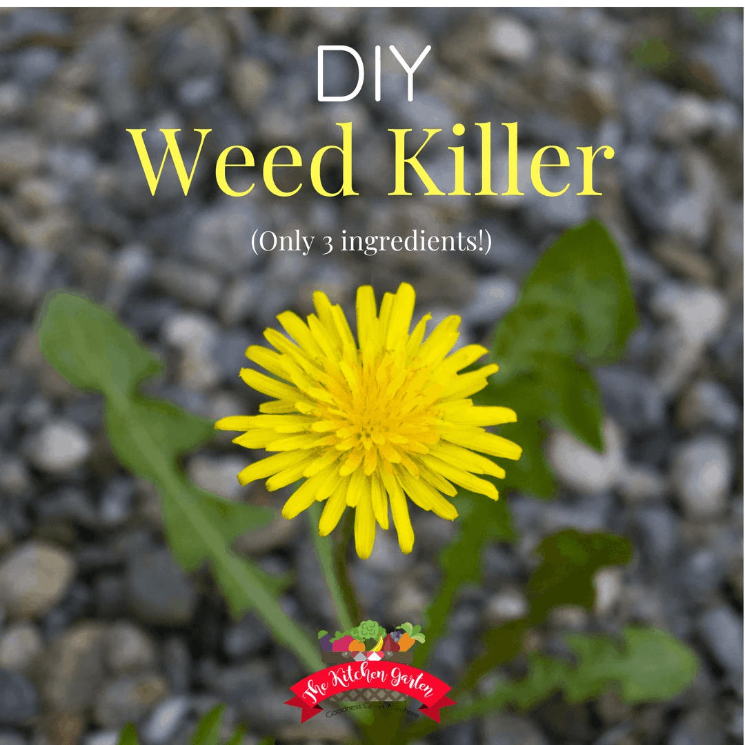 How to Make DIY Weed Killer (Only 3 Ingredients!) - The