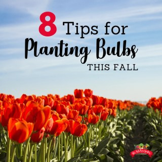 8 Tips for Planting Bulbs in the Fall