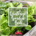 How to Winterize the Garden