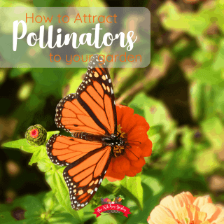 How to Attract Pollinators to the Garden