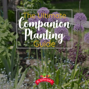 Companion Planting for Vegetables and Herbs