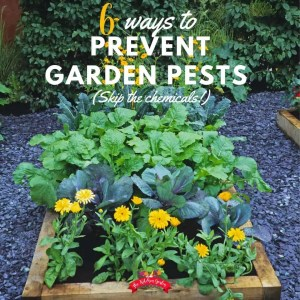 6 Ways to Prevent Garden Pests