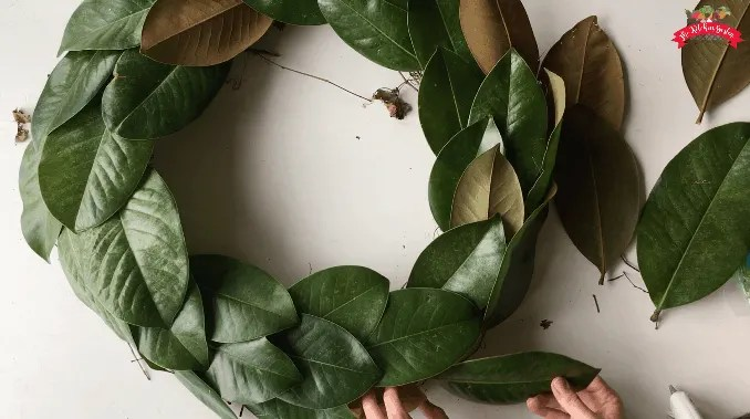 magnolia leaves grapevine wreath