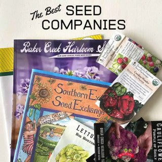 Best Garden Seed Companies