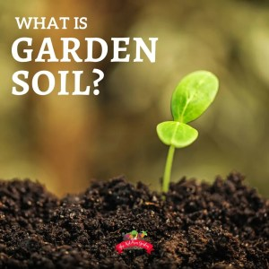 garden soil with small green seedling