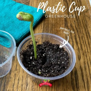 Plastic Cup Greenhouse