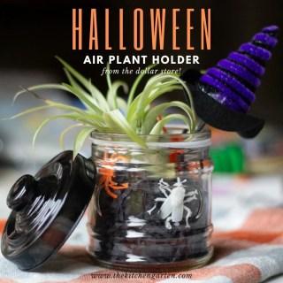 DIY Halloween Air Plant Holder