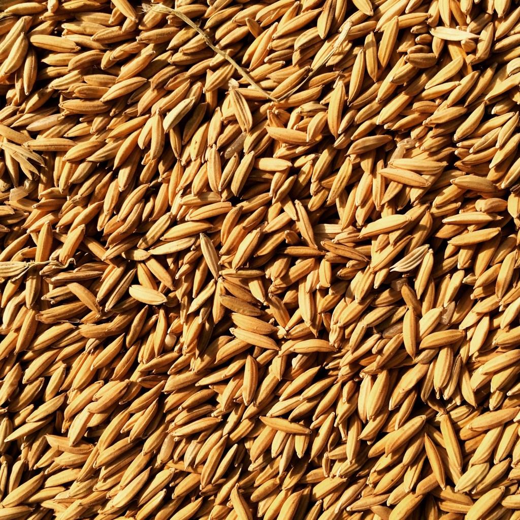 rice kernels