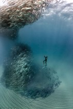 33432B1F00000578-3544257-PIC_BY_WILLIAM_WINRAM_CATERS_NEWS_PICTURED_Diver_Fred_Buyle_trea-a-86_1460891610562
