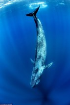 bluewhale4