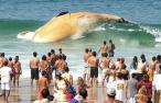 dead-whale