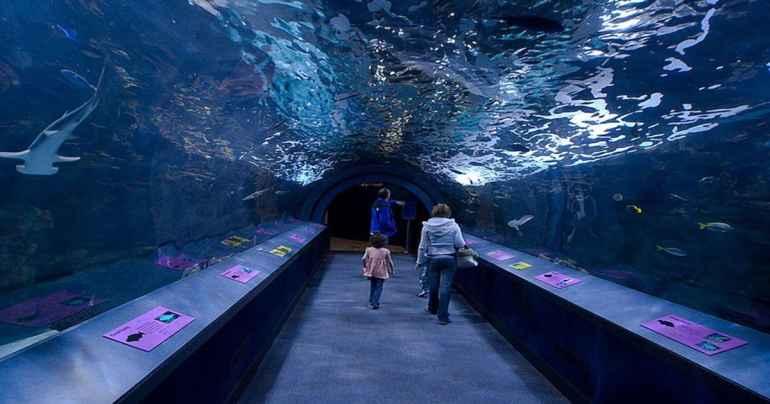 o que fazer em Chicago - Shedd Aquarium Chicago