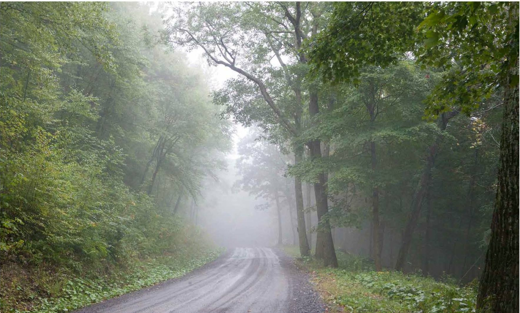 Foggy Road in Upstate New York
