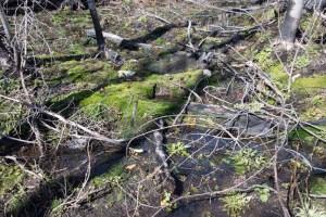 May 11/19 – Bertha Trail