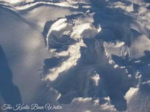 Christmas in Alberta (7 Quick Takes Vol. 16)