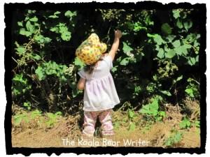 WW: Berry Picking