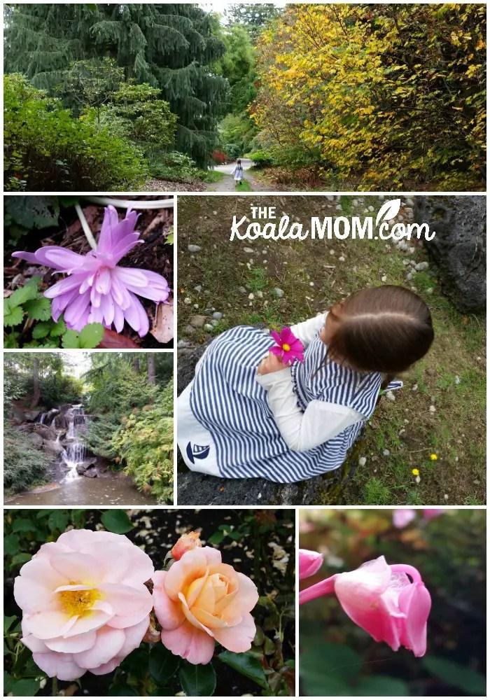 Fall flowers at VanDusen Gardens