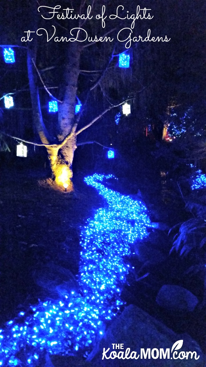 Festival of Lights at VanDusen Gardens - one of our favourite family Christmas activities in Vancouver
