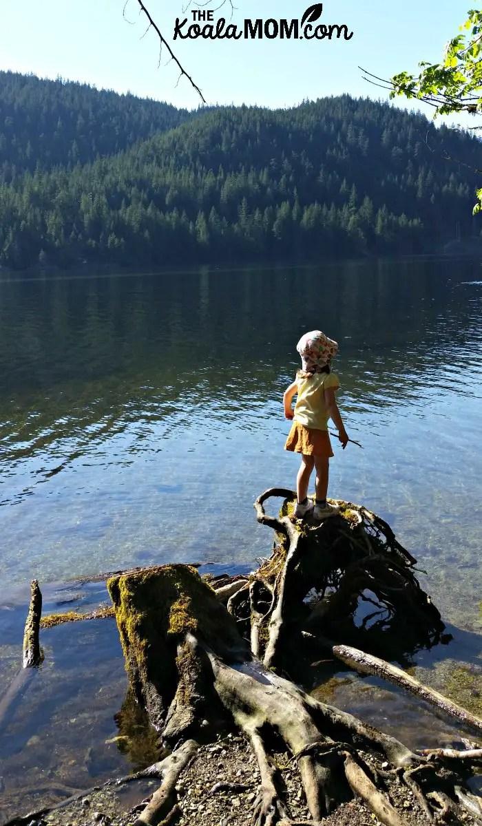 Toddler standing on a root next to Buntzen Lake