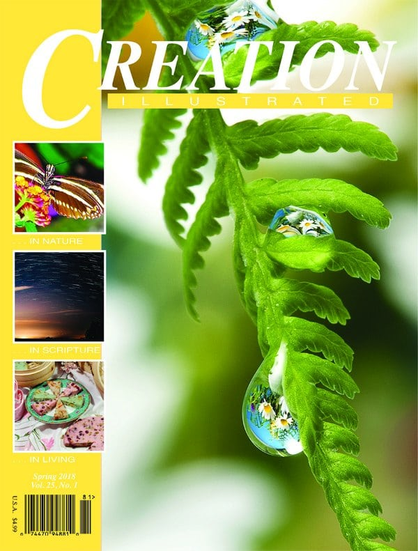 Creation Illustrated Spring 2018 issue, with a unit study on butterflies