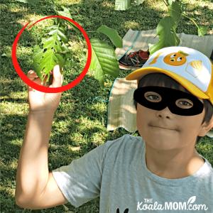Earth Rangers teaches kids about nature and conservation with fun missions!