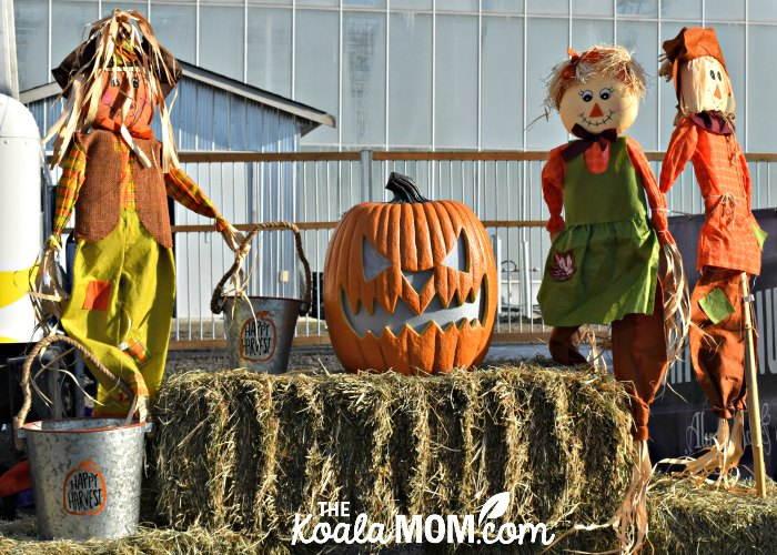 Scarecrows and jack-o-lanterns at Harvest Glow in Langley, BC.
