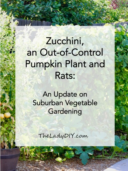Title page for blog post Zucchini, an out-of-control pumpkin plant and rats: an update on suburban vegetable garden. A photo of the full garden.