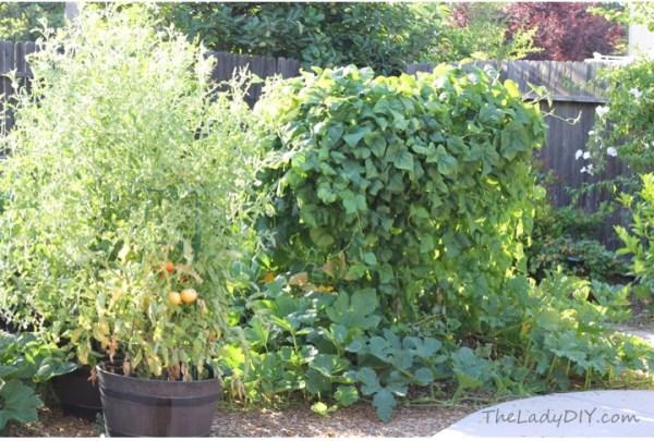 Full Garden_theladydiy