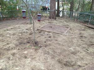 Gardening Tip: Reuse Autumn Display Hay As Seed Blanket!