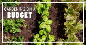 Gardening Update, 6/1!