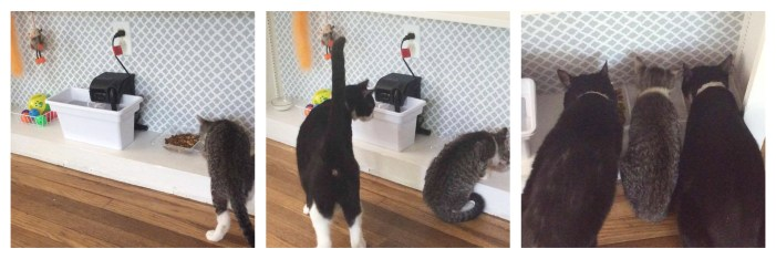 How to create DIY Summer Pet Food Stations
